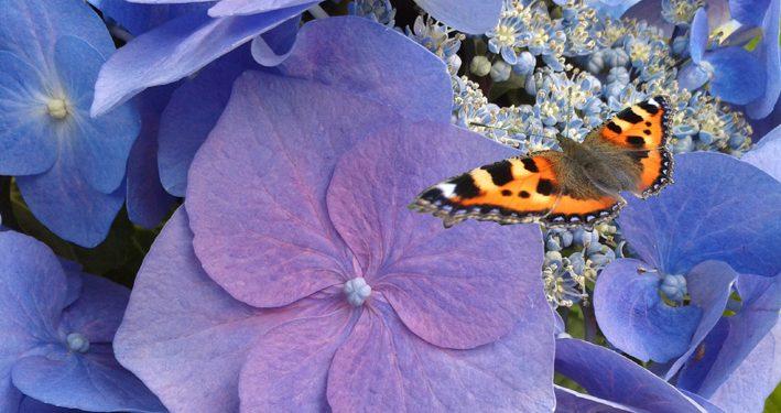 Traumverwirklichung Schmetterling