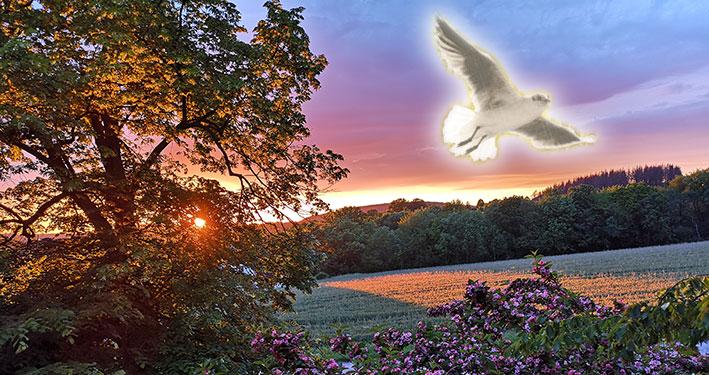 Inspiration durch sprechende Tauben