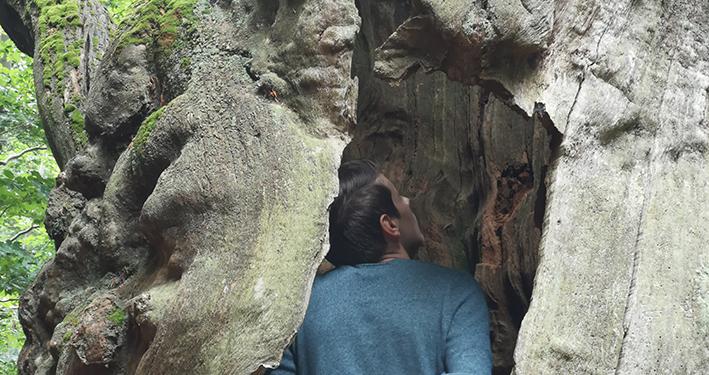 Wie der Lebensbaum gesund wurde