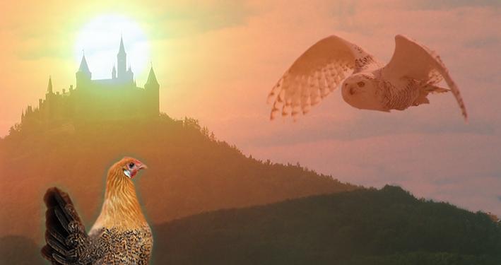Eule und Huhn. Wie schmeckt die Freiheit