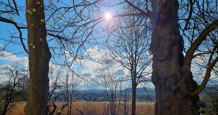 Das Glück wartet hinter dem nächsten Baum